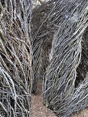 Ocala, FL, Appleton Museum of Art, Fancy Free, 2016 (Sculptor: Patrick Dougherty) (Mary Warren (8.7+ Million Views)) Tags: ocalafl appletonmuseumofart architecture building art sculpture sapling branches wood