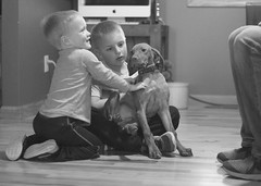 March 10: The Boys (mickifries) Tags: 365project familylife candidchildhood kids love laughter family fun photoaday documentlife documentyourdays brothers littleboys boys boyhood blackandwhite puppies pet viszla viszlapuppy