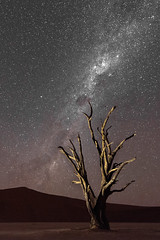 The Milkyway in Deadvlei (Gies! (back home, trying to catch up)) Tags: stars melkweg milkyway deadvlei sterren namibie