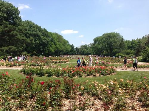 Thumbnail from Columbus Park of Roses