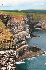 Fowlsheugh reserve (Laurine B.) Tags: cliff seascape canon landscape scotland reserve vegetation ecosse rspb canon1100d