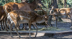 Safari park beekse bergen (5 of 34) (Mastermindzh) Tags: animals gorilla rick safari giraffe bergen van tijger aap vogel safaripark lieshout leeuw zwijn beekse
