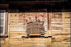 20130806-41 (sulamith.sallmann) Tags: wood flowers plants house plant flower building floral fleur wooden europa pflanze pflanzen haus blumen latvia blume holz bauwerk gebäude lettland deko latvija hölzern kurzeme lva libau liepāja kurland sulamithsallmann