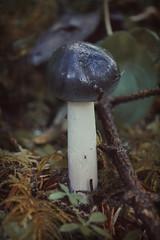 (I'm a sea) Tags: trees macro cute mushroom forest moss woods shroom wonderland twigs