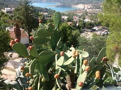 Mediterranean Landscape (Ginas Pics) Tags: vacation cactus espaa lake smart spain holidays mediterranean tourist opuntia vinyard costablanca turquoiselake ginaspics hikingtrails cactusfruit mediterraneanlandscape orxeta bestofspain holidayarea httpginanews05blogspotcom mediterraneanmountains reginasiebrecht