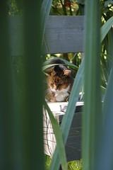 garden autumn 2013 (Jrn Schiemann) Tags: autumn cat garden rotterdam chair mari enzo allotment snv autoprogetazzione strevennaarverbetering
