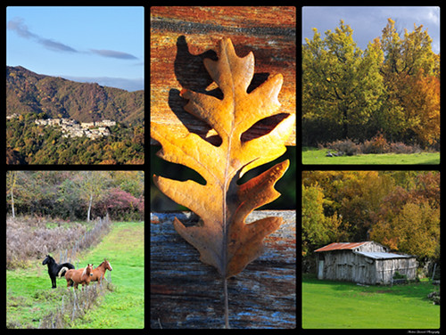 Autumn Collage by andrea quercioli