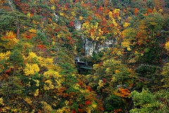 Stuck リゾートみのり号~宮城,鳴子峽 Naruko Gorge~