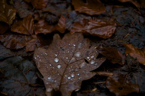 Early morning rain ©  Still ePsiLoN
