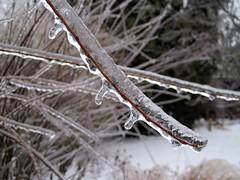 Freezing rain storm (60Fire) Tags: winter ontario canada ice december guelph icestorm emergency freezingrain 2013