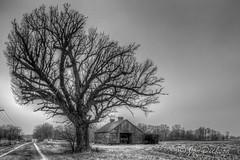 A Cold Winter's Day (Jon Dickson Photography) Tags: mygearandme mygearandmepremium