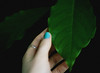 {107/365} remember what is pure (lavishlylush) Tags: leaf hand pure apieceofme avocadotree
