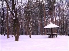 Lost in the snowy woods (kontinova2) Tags: wood winter snow coth5 mygearandme mygearandmepremium mygearandmebronze mygearandmesilver mygearandmegold mygearandmeplatinum