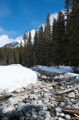 Sign of Spring (djking) Tags: trees snow canada water nationalpark spring stream alberta banff johnsonlake