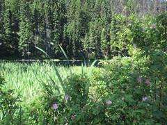 Rest spot (jamica1) Tags: canada bc columbia area rest british gulliford