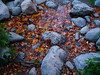 Fall On The Water (J Swanstrom (Never enough time...)) Tags: autumn red orange green fall water colors leaves yellow rock stone pond kodak dx7590 jswanstromphotography