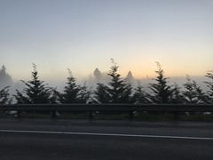Sunrise on early morning drive to Portland #1 (Tina Stadeli) Tags: dawn driving i5 interstate5 silhouette treesillhouettes willametteriver freeway bridge fog morning sunrise wilsonvillememorialstatepark pastelskies christmastree