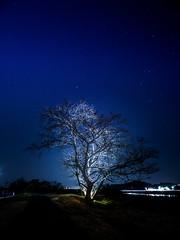 PhoTones Works #8497 (TAKUMA KIMURA) Tags: photones olympus omd em1mark2 takuma kimura 木村 琢磨 landscape nature night scene light up tree silhouette 風景 景色 自然 夜景 夜 ライトアップ 木 樹 シルエット lumecube