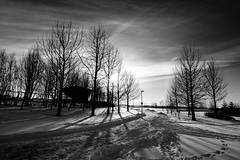 Low winter sun - Kopavogur, Iceland (Páll Guðjónsson) Tags: iceland kopavogur monochrome winter snow trees silhouette lowsun