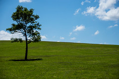 lone tree (Greg Rohan) Tags: grass blue green bluesky nature tree sydneypark sydney park 2017 d7200 stpeters