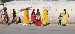 A day in Pushkar (Alex L'aventurier,) Tags: pushkar inde india rajasthan street rue city ville women femme colours colors couleurs sari saree wall mur hindu pokkar