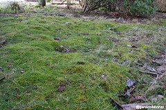 vole damage (garden4dinner) Tags: voles meadowmouse