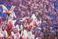 Arroxa (joxelu.) Tags: loreak luz flores nafarroa f2845 macro bokeh navarra naturaleza