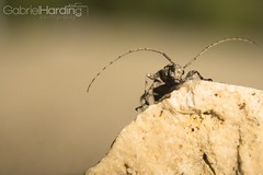 Bug on a Mountain (Gabriel Harding Photography) Tags: brown macro nature field rock bug insect depth