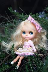 25/52 Claudia the Cupcake