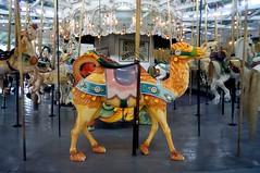 carousel camel (t55z) Tags: eastprovidence carousel camel rhodeisland merrygoround crescentpark
