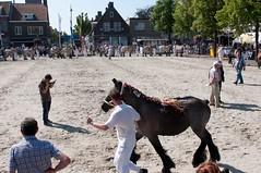DSC_2345 (Ton van der Weerden) Tags: horses horse dutch de cheval belgian nederlands belges draft chevaux belgisch trait ijzendijke trekpaard trekpaarden donnavanthoogeindmommersteeg