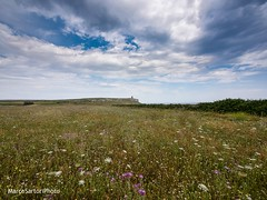 The ancient lighthouse over the sea of flowers. (MarcoSartoriPhoto) Tags: sea sky italy lighthouse flower love nature beauty clouds landscape italia olympus best explore salento puglia omd marcosartori uploaded:by=flickrmobile flickriosapp:filter=nofilter mymaco marcosartoriphoto