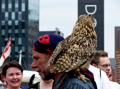 A pirate with an admirer (rustumlongpig) Tags: liverpool pirate owl shoulder