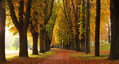 Chestnut-lined Avenue in Autumn (Batikart) Tags: park city autumn trees shadow people urban plants sun sunlight black green nature colors grass leaves canon germany garden bench way landscape outdoors deutschland vanishingpoint leaf flora october europa europe day pat