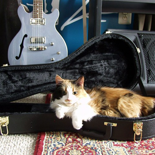 Tripoli apparently spent the night sleeping in my mandolin case