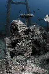 FMwrkduo2767 (gerb) Tags: ocean topv111 510fav mexico topv555 topv333 underwater topv999 scuba fv5 fisheye loveit shipwreck duotone topv777 wreck seaofcortez tvp aquatica d7000 sigma1017fe