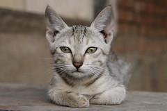 52W2013   Le chat