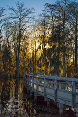 Phinizy Swamp Nature Park, Augusta, GA (Ana Quinlan Photography) Tags: park nature birds landscape pond path swamp augusta phinizy