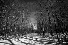 Alone (GWP Photography) Tags: schnee blackandwhite bw snow canon newjersey woods alone path nieve nj neve monmouth neige monmouthcounty  nieg howell  efs1022mmf3545usm eos50d   vision:outdoor=0968