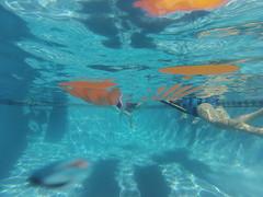 Swimming (pete4ducks) Tags: travel vacation island hawaii bigisland 500views kailuakona 2014 gopro