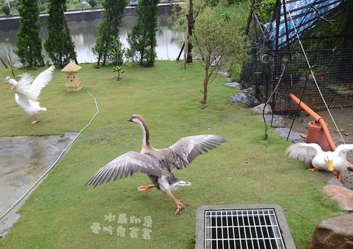水鳥印象032.jpg