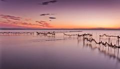 Redes (Christian Olivares) Tags: sky espaa valencia clouds atardecer twilight spain long exposure pentax nubes larga albufera exposicin