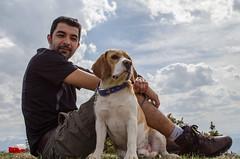 Dare (Gadjowsky) Tags: portrait dog beagle nikon d5100