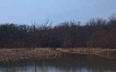Chatham, 2014 (gregorywass) Tags: winter lake water march illinois spring wildlife chatham springfield sanctuary refuge 2014