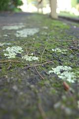 DSC_0146 Flickr (ZANGamy_SOL) Tags: smalldof