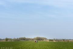 The two of us (Ans van de Sluis) Tags: flowers trees flower tree water dutch yellow nijmegen landscape pond bomen beek nederland thenetherlands boom geel bloemen landschap vijver bloem ooij ooijpolder