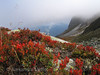 Bavon (Alexandre Mottet Photographie) Tags: autumn switzerland suisse blueberry valais valdentremont bavon
