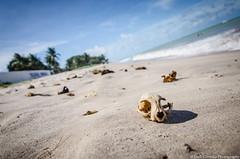 Skulls in the beach (Jordi Corbilla Photography) Tags: street sunset brazil beach brasil nikon streetphotography dreams streetphoto d7000 jordicorbilla jordicorbillaphotography