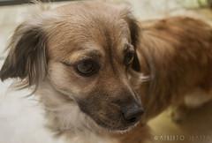 Dora (Hugo Alberto Ibarra) Tags: dog pet pets cute beauty animal perro cachorro doggie mascota mascotas perrito dogsandcats ternura tierno ltytr2 ltytr1 ltytr3