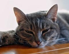 MIL8 (ansacariofoto) Tags: cats gatti tamron1750 nikond5000